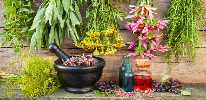 heilpflanzen esoterische wirkung - Die esoterische Wirkung verschiedener Heilpflanzen