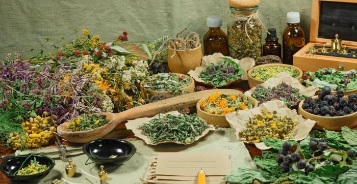 heilpflanzen anwendung - Was sind Heilpflanzen?