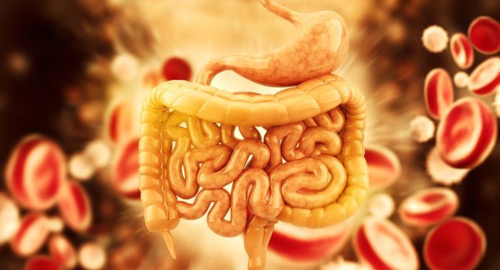 verdauungssystem - Informationen über das  Verdauungssystem
