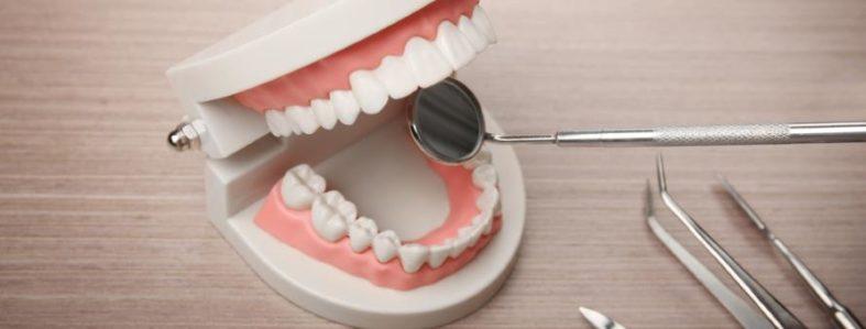 zahnformel - Was ist die Zahnformel?