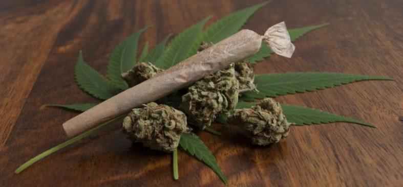 cannabissucht - Cannabissucht