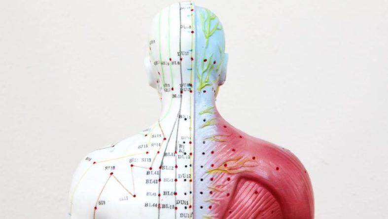 elektroneurografie - Elektroneurografie - Untersuchung an den Nervenleitbahnen