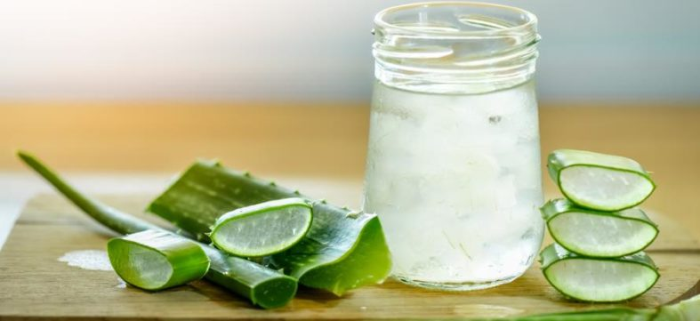 aloe vera - Aloe Vera Heilpflanze