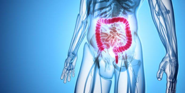 mastdarmuntersuchung - Mastdarmuntersuchung - Vorbeugung gegen Darmkrebs