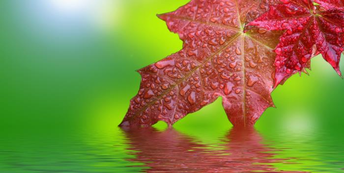 ahornwasser - Ahornwasser - erfrischender Hype aus den USA